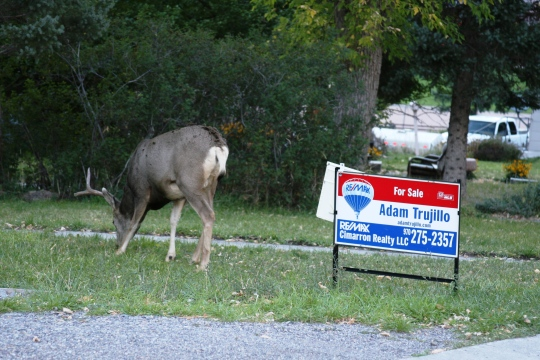 Does a buck in your front yard help or hurt the sale of your home in Ouray?