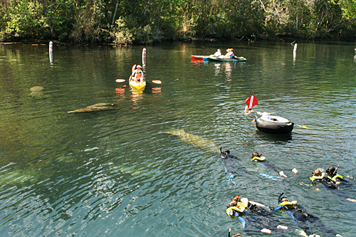 Homosassa Springs State Park is one of the only places in the world where you can  swim with manatees.