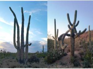 RVLuckyOrWhat.com: Fun with cactus