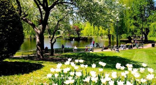 8 Boston Garden